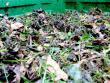 10 krokov na skompostovanie lístia (aj orechového)